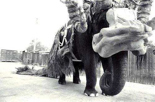 bantha elephant 2.jpg
